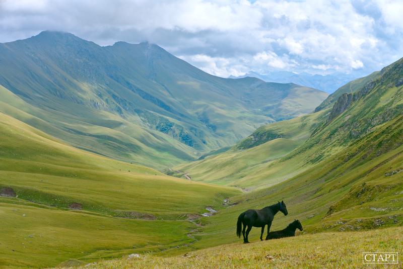 Лошади в долине р. Речепста