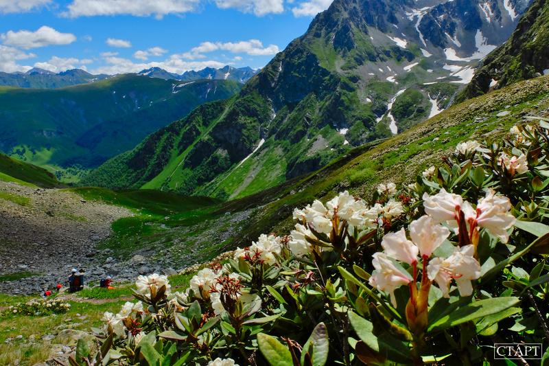 Туры в Архыз на цветение лугов