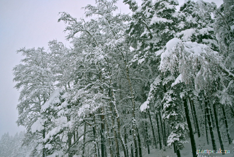 Заснеженные деревья в Архызе