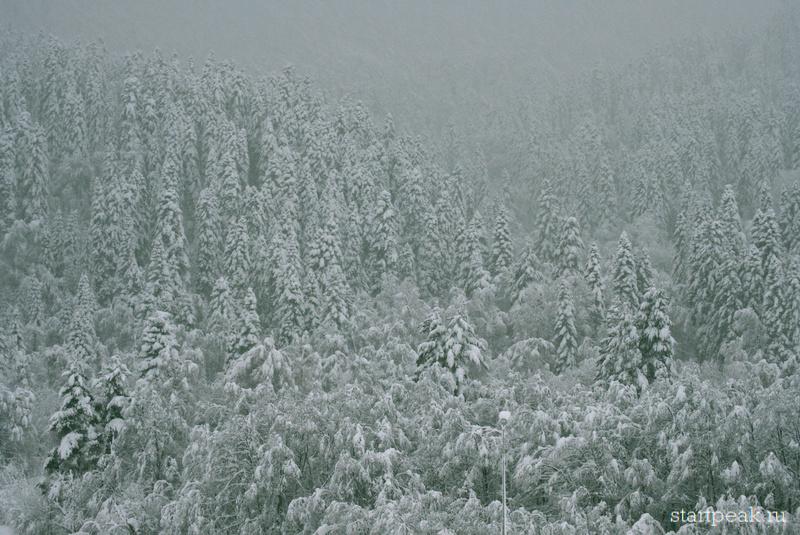 Заснеженный лес в Архызе