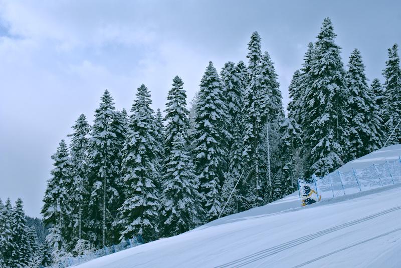 Леса Архыза после снегопада