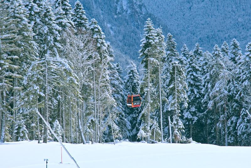 Лес на северном склоне в Архызе