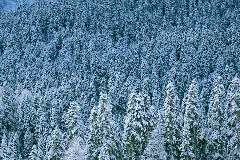 Паттерн лес