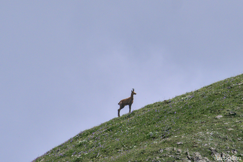 Дикие животные на Кавказе