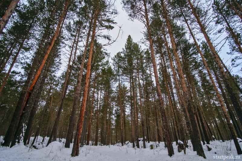 Зимние прогулки по Архызу